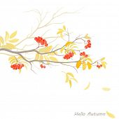 Vector background with branch of rowan.