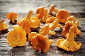 image of chanterelle mushroom  - chanterelle mushrooms on a dark wood background - JPG