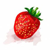 strawberry  Vector illustration  hand drawn  painted watercolor