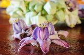 Purple Crown Flower