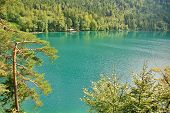 picture of bavarian alps  - Pine and lake in Bavarian Alps Germany - JPG