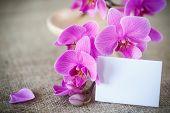 Beautiful Purple Phalaenopsis Flowers