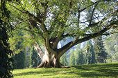 foto of planting trees  - giant magical tree in morning light - JPG
