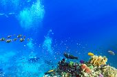 stock photo of butterfly fish  - Scuba divers coral and fish in the Red Sea.Egypt ** Note: Soft Focus at 100%, best at smaller sizes - JPG