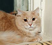 Red Cat Lying On Windowsill