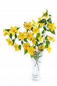 foto of cruciferous  - Marsh Marigold Yellow wildflowers in vase on white background - JPG