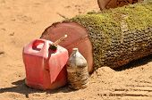 stock photo of chainsaw  - The end of a fallen oak tree log and chainsaw fuel and oil jugs on a logging landing - JPG