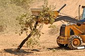 foto of backhoe  - Backhoe loading up brush following a cleanup of trees from a new commercial construction development - JPG