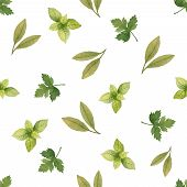 picture of bay leaf  - Watercolor seamless pattern of parsley spinach Bay leaf vector illustration - JPG