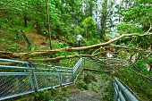image of collapse  - Tree collapse after typhoon - JPG