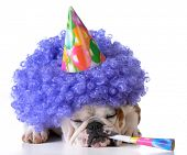pic of clown face  - birthday dog  - JPG