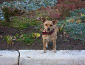 image of stray dog  - The lonely stray dog in a red collar. ** Note: Shallow depth of field - JPG