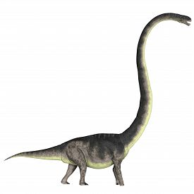 stock photo of herbivore  - Omeisaurus was a herbivorous dinosaur that lived in the Jurassic Period of China - JPG