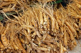 foto of ginseng  - crowd of real ginseng from the North of Korean Republic - JPG