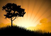 Amazing Natural Sunset Landscape With Tree Silhouette, Vector