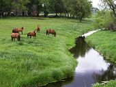 picture of horse riding  - Horses in a pasture by a creek - JPG