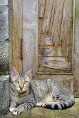 Cat sitting in front door