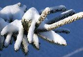 Winter Snow On Branch