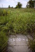 image of katrina  - Overgrown empty lot after Hurricane Katrina - JPG