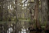 foto of bayou  - Swamp near New Orleans - JPG