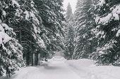 Winter wonderland. Snowy forest. poster