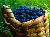 Basket Of Blueberries. One Wicker Basket Of Blueberris On Natural Background poster