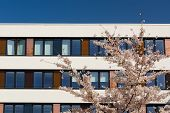 Facade Of Modern Office Building With Spring Blossoming Apple Tree In Courtyard And Blue Sky Reflect poster