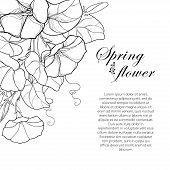 Vector Corner Bouquet With Outline Ipomoea Or Morning Glory Flower, Leaf And Bud In Black Isolated O poster