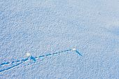 Trajectory lines on snow surface