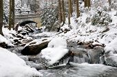 winter creek in the national park Sumava - Czech Republic