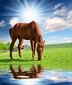 foto of horse head  - horse in the meadow - JPG