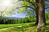 stock photo of bohemia  - Spring landscape in the national park Sumava  - JPG