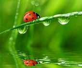 picture of bubble sheet  - fresh morning dew and ladybird - JPG