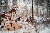 Husky Dogs Stands On Logs Felled In A Winter Snow-covered Forest. Siberian Husky Is Black-white And  poster