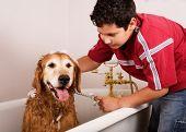 Scrub-A-Dub Dog