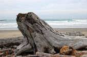 Old Tree Stump On The Beach