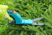 Seasonal Pruning Trees With Pruning Shears. Female Gardener Hand In Protective Gloves Pruning Tree L poster