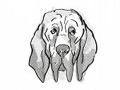 Retro Cartoon Style Drawing Of Head Of A Bloodhound  , A Domestic Dog Or Canine Breed On Isolated Wh poster