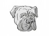 Retro Cartoon Style Drawing Of Head Of A Bullmastiff Or Silent Watchdog, A Domestic Dog Or Canine Br poster