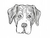 Retro Cartoon Style Drawing Of Head Of An Entlebucher Mountain Dog, A Domestic Canine Breed On Isola poster