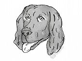 Retro Cartoon Style Drawing Of Head Of A Flat-coated Retriever, A Domestic Dog Or Canine Breed On Is poster