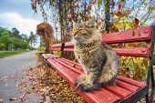 Lonely Tabby Cat Is Sitting On The Bench Outside poster
