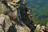 Dangerous Rocky Cliffs Jagged To Ocean. Peaked Rocks And Cliffs On The Seashore. Flowers Grow On A R poster