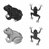 Isolated Object Of Wildlife And Bog Symbol. Collection Of Wildlife And Reptile Vector Icon For Stock poster