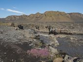 Icelandic Landscape With Canyon Of Innri Innri-emstrura, Pink Flowers, Mountains And Green Hills. Fj poster
