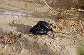 Bugs... Spring... Love
