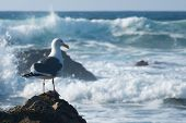 Seagull stands in front of splashing waves