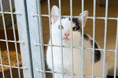 black and white cat in animal shelter