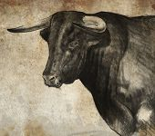 Sketch made with digital tablet of spanish bull