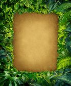 stock photo of jungle flowers  - Wild jungle border frame with rich tropical green plants as ferns and palm tree leaves found in southern hot climates as south America Hawaii and Asia with framed parchment copy space center - JPG